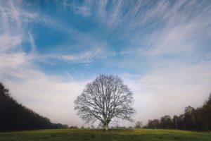 tree condition survey